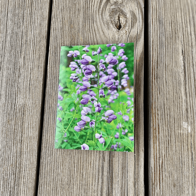 Double sided Iris Notecard by Kelli Thompson
